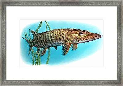 Muskellunge Framed Print by Roger Hall