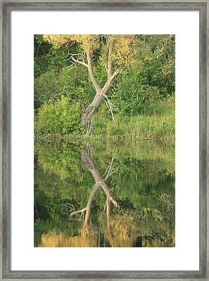 Framed Print featuring the photograph Muskoka Trees by Paula Brown