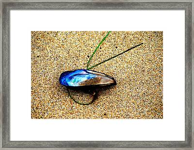 Framed Print featuring the photograph Mussel Shell And Seagrass by Bob Wall