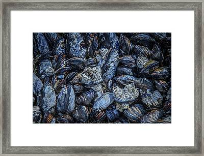 Mussels In Blue Cluster Framed Print by Roxy Hurtubise