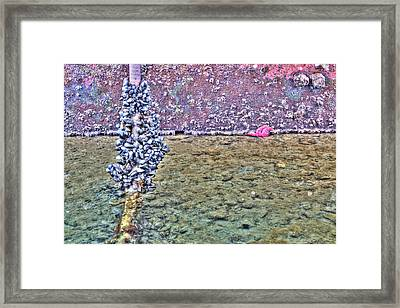 Mussles And A Starfish Framed Print by Heidi Smith