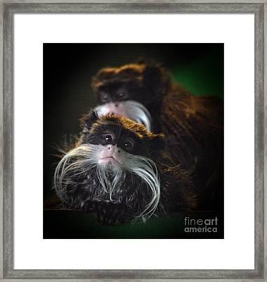 Mustached Monkeys Emperor Tamarins  Framed Print by Jim Fitzpatrick