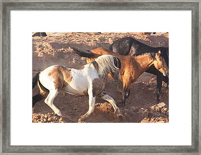 Mustang Action Framed Print