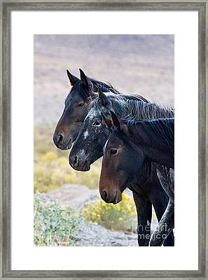 Mustang Close Order Drill Team Framed Print by Vinnie Oakes