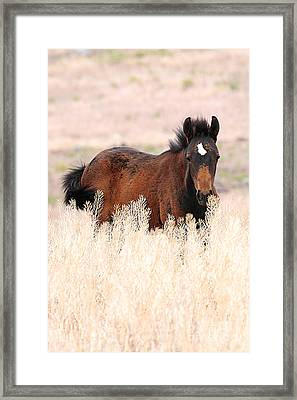 Framed Print featuring the photograph Mustang Colt In The Grasses by Vinnie Oakes