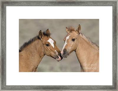 Mustang Foals Framed Print by JeanLouis Klein and MarieLuce Hubert