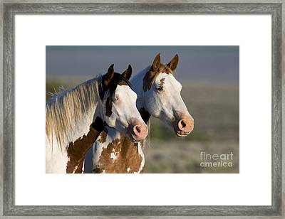 Mustang Mare And Son Framed Print by Jean-Louis Klein and Marie-Luce Hubert
