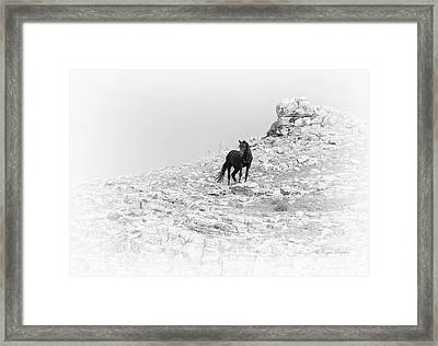 Mustang On Hill 2 Bw Framed Print