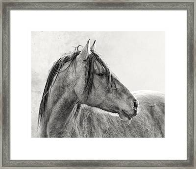 Mustang Framed Print by Ron  McGinnis