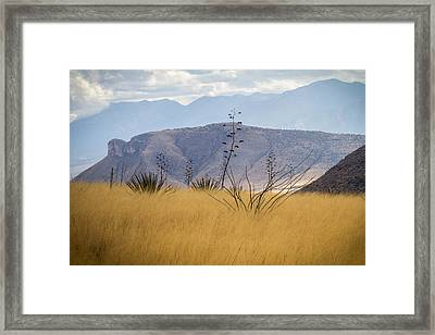 Mustang View Framed Print by Beverly Parks