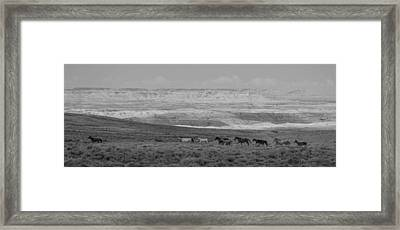 Mustangs Of The Adobe Framed Print