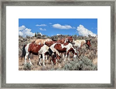 Mustangs Roaming Free Framed Print