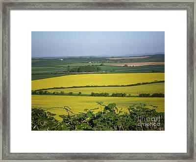 Mustard Colour Fields Framed Print by Ann Fellows