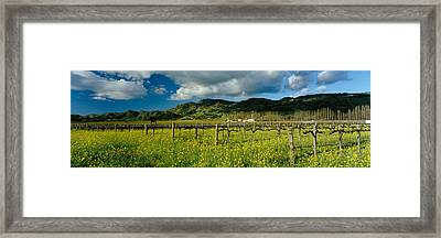 Mustard Crop In A Field Near St Framed Print by Panoramic Images