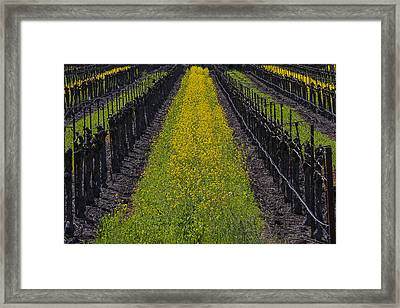 Mustard Grass In Vineyards Framed Print by Garry Gay