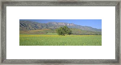 Mustard In Green Field And Topa Topa Framed Print