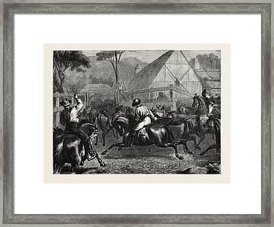 Mustering Cattle In Australia Framed Print by Australian School