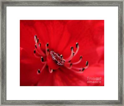 Framed Print featuring the photograph Mutant Macro by Chris Anderson