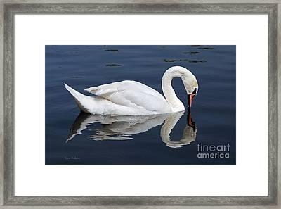 Mute Swan Kissing Its Reflection Framed Print by Susan Wiedmann