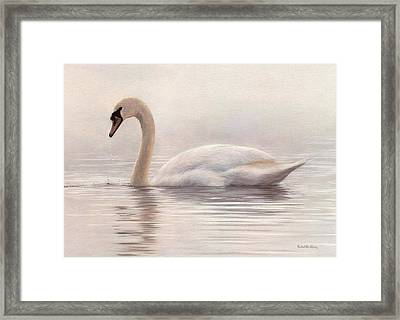 Mute Swan Painting Framed Print