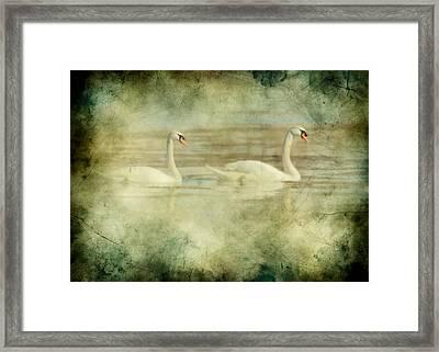 Mute Swan Pair Framed Print