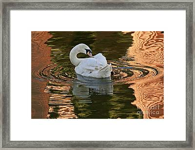 Framed Print featuring the photograph Preening by Kate Brown