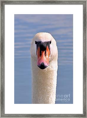 Mute Swan Staring Framed Print by Susan Wiedmann