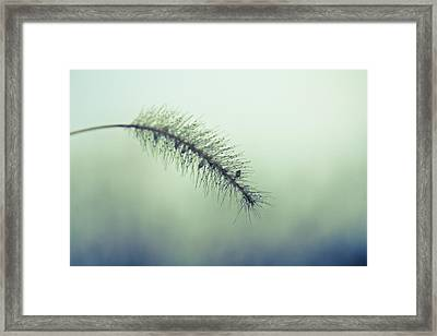 Muted Beauty Framed Print