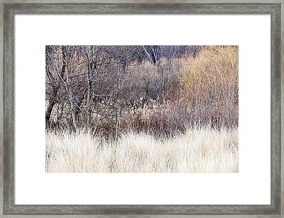 Muted Colors Of Winter Forest Framed Print