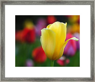 Framed Print featuring the photograph Muted Colors by Paul Noble