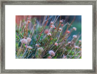 Muted Pink Framed Print