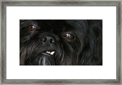 Mutley Framed Print