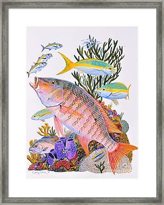 Mutton Snapper Reef Framed Print by Carey Chen