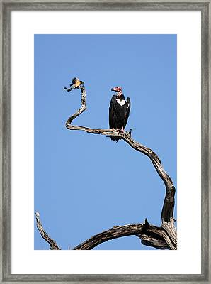 Framed Print featuring the photograph Mutual Admiration by Fotosas Photography