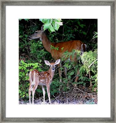 My Baby Framed Print by Deena Stoddard
