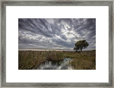 My Backyard Framed Print by Jon Glaser