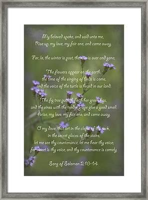 My Beloved Spoke - Purpletop Vervain Verbena Bonariensis Framed Print