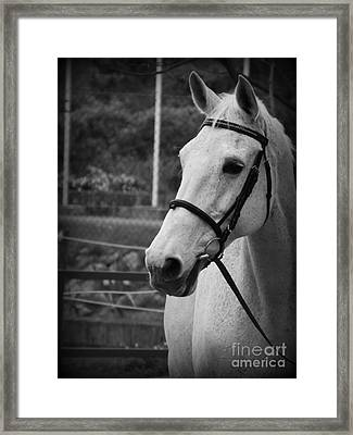 Framed Print featuring the photograph My Best Friend by Clare Bevan