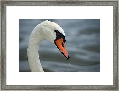 My Best Side Framed Print by Thomas Fouch