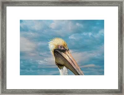 My Better Side - Florida Brown Pelican Framed Print