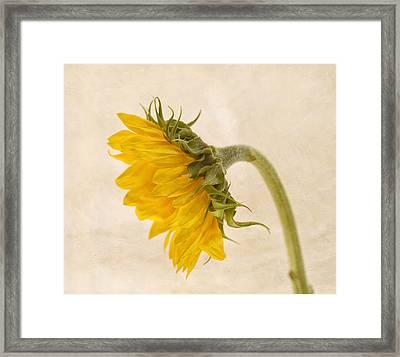 My Better Side Framed Print by Kim Hojnacki