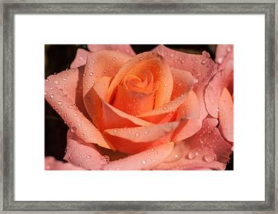 My Birthday Rose Framed Print