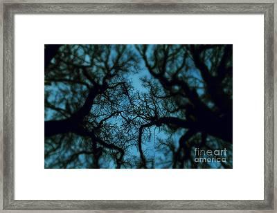 My Blue Dark Forest Framed Print