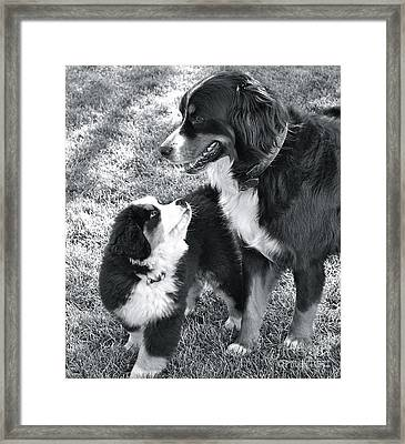 Framed Print featuring the photograph My Bodyguard by Barbara Dudley