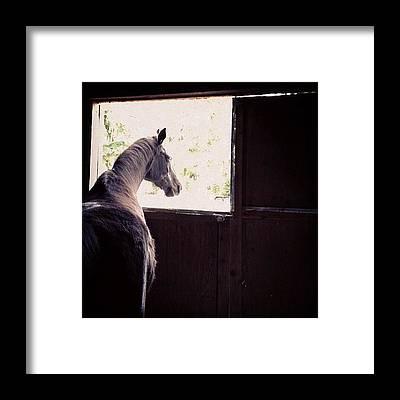 Horse Framed Prints
