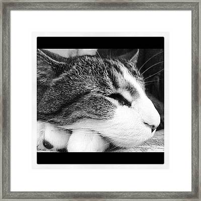 My Buddy Framed Print by Mike Maher
