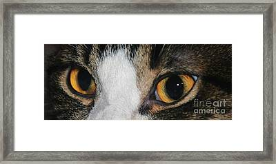 My Cat Is The Cat Of All Cats Framed Print by PainterArtist FIN