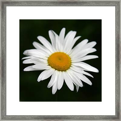 My Daisy Framed Print by Denyse Duhaime