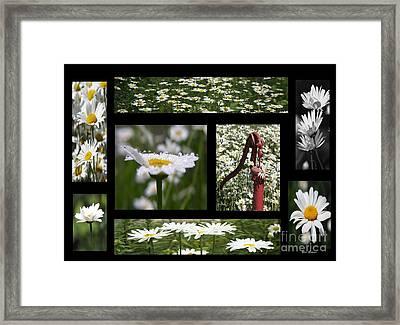 My Daisy Framed Print by Yumi Johnson
