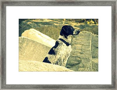 My Dog Aska Framed Print by Saki Art